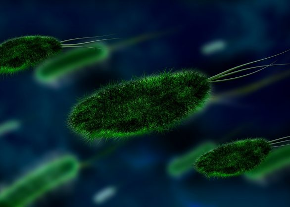 Jak zwiększyć odporność organizmu
