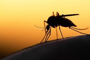 Niezawodny pomocnik w walce z komarami